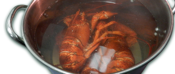 Cooked lobster in pot