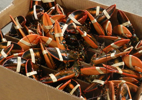 Box of Lobsters